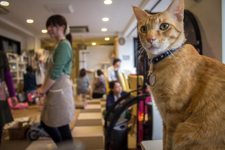 cat cafe japan4