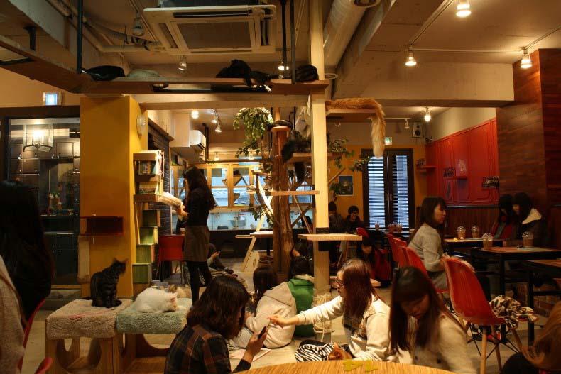 cat cafe tokyo3