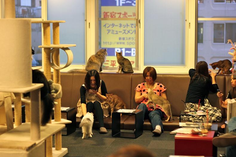 cat cafe tokyo4