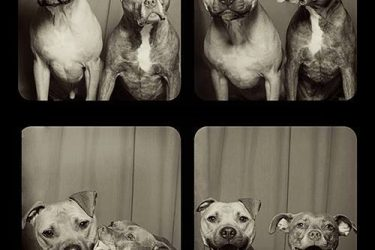 Dogs In Photo Booths