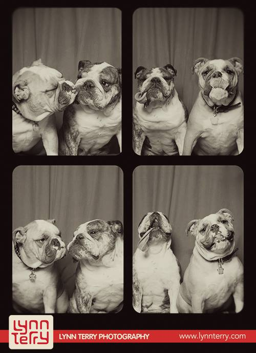 dogs-in-photo-booths1