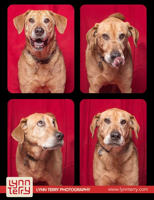 dogs-in-photo-booths3