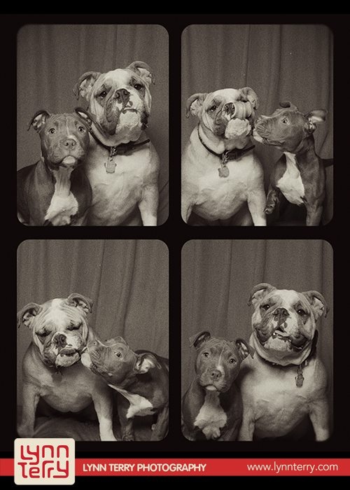 dogs-in-photo-booths5
