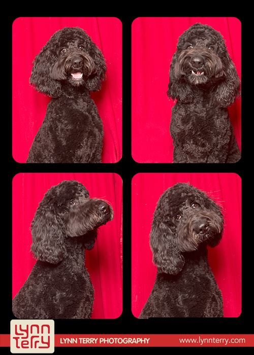 dogs-in-photo-booths6