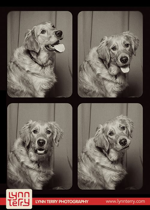 dogs-in-photo-booths7