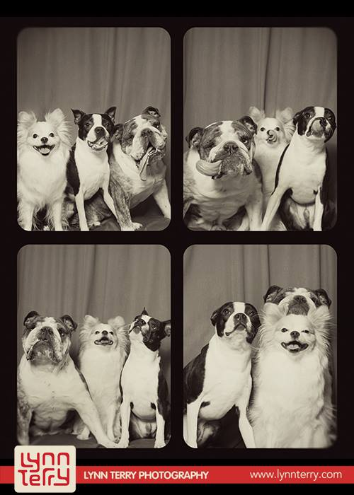 dogs-in-photo-booths8