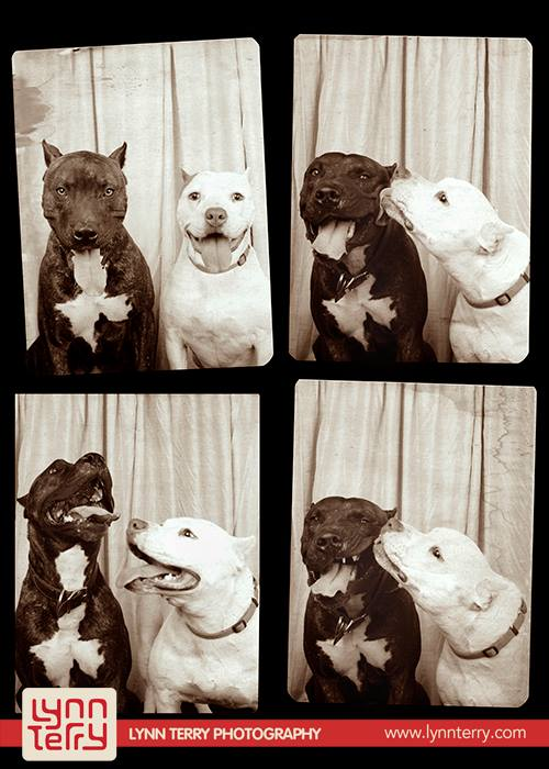 dogs-in-photo-booths9