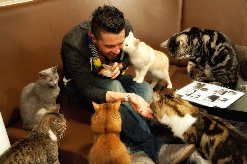 japan cat cafe3