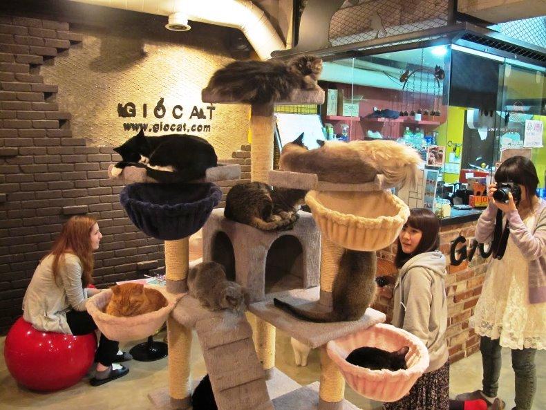japan cat cafe4