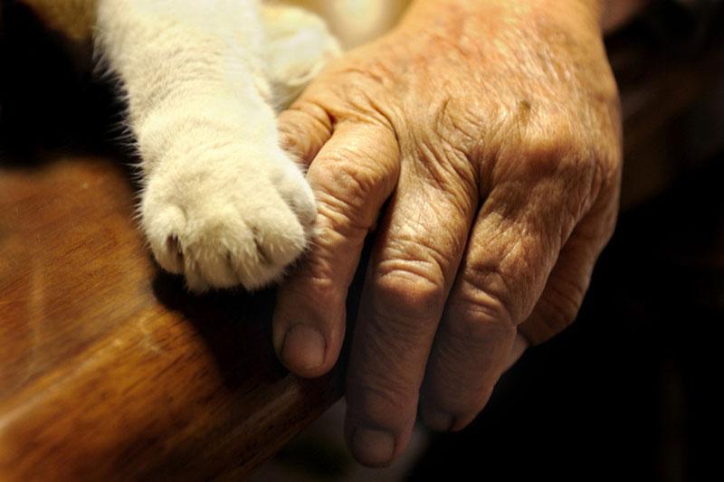 japanese grandma and her cat1