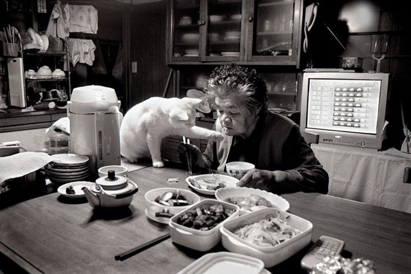 japanese grandma and her cat13