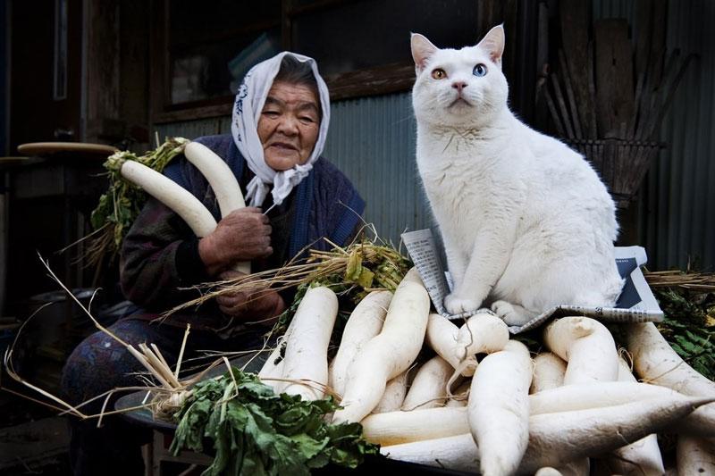japanese grandma and her cat14