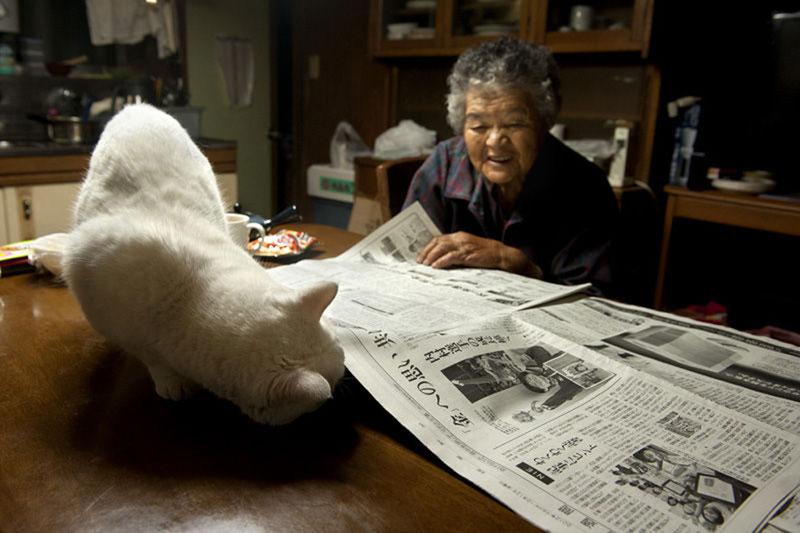 japanese grandma and her cat6