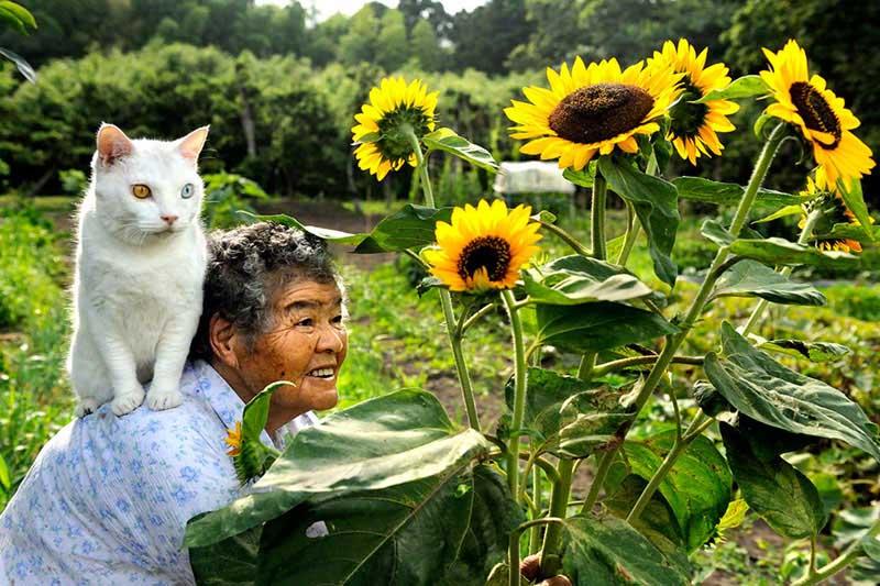 japanese grandma and her cat7