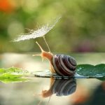 Magical Beauty Of The Miniature World of Snails