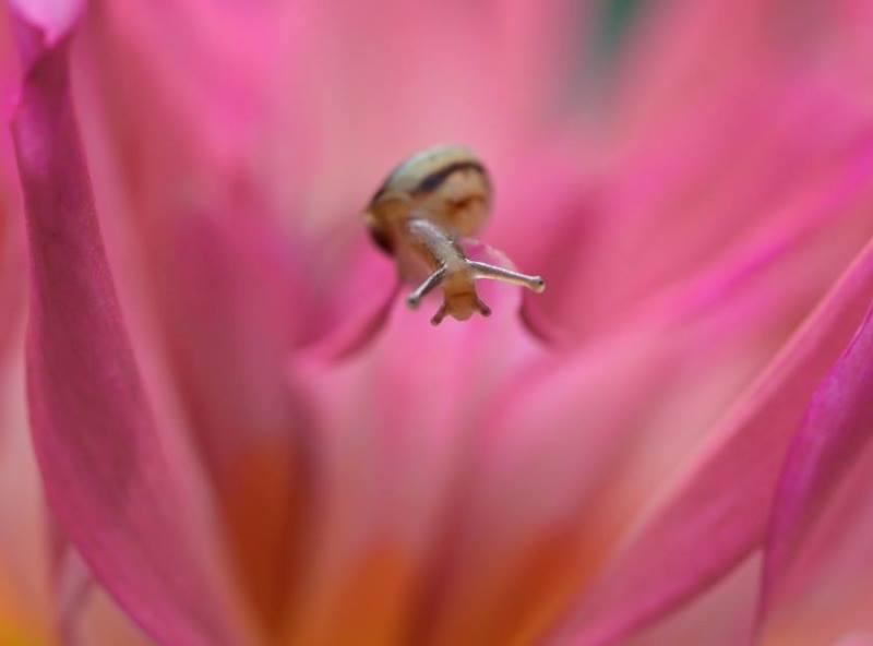 macro photography insects vyacheslav mishchenko14