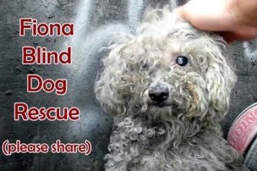 Adorable Blind Dog Rescued By Hope For Paws