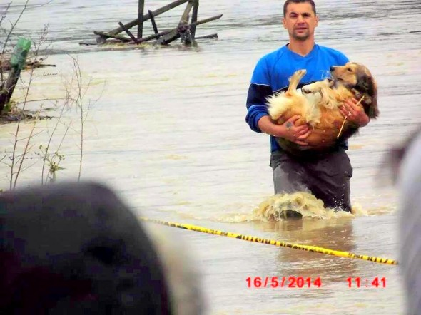 Heroic-Bosnians-Brave-Dangerous-Floodwaters-to-Save-Dogs