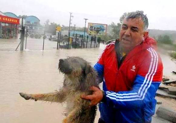 Heroic Bosnians-Brave-Dangerous-Floodwaters-to-Save-Dogs
