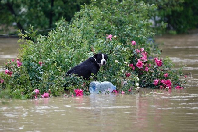 bosnia flood animals
