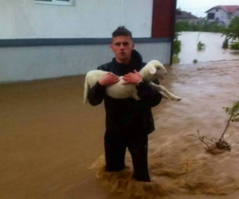 bosnia flood animals2