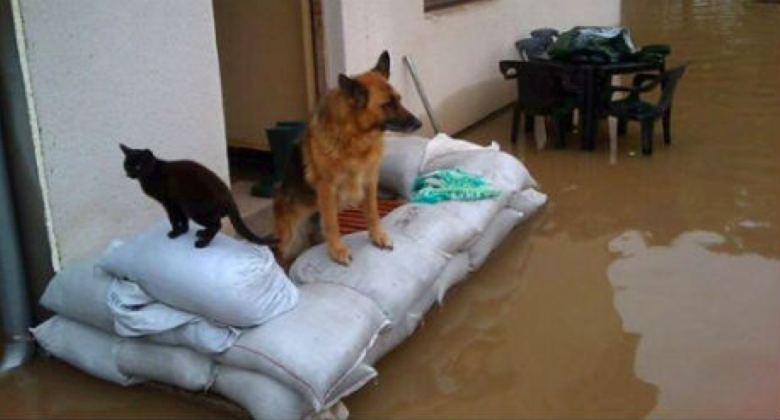 bosnia flood animals3