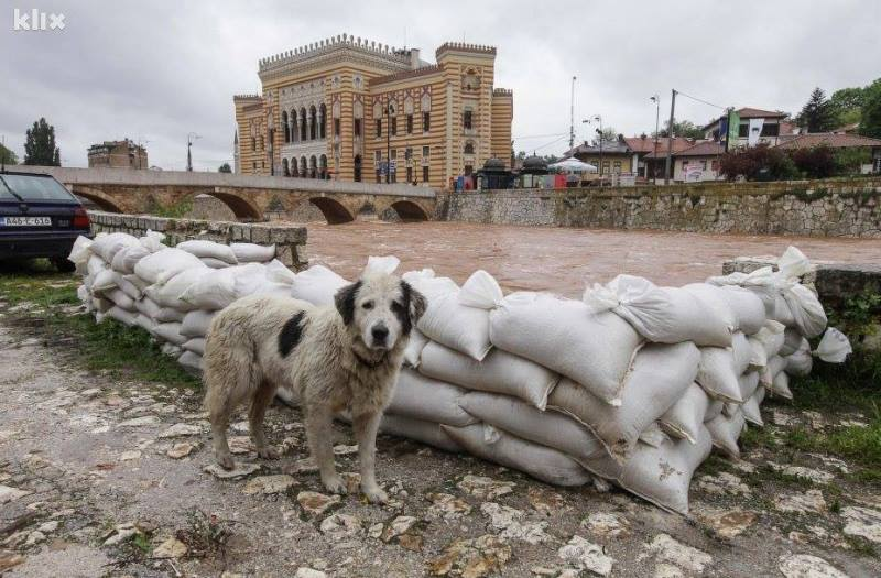 bosnia flood animals4