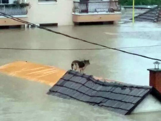 bosnia flood animals8