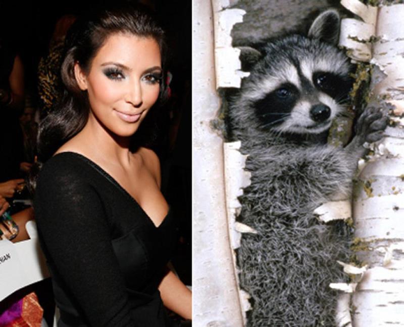 celebrities that look like animals Kim Kardashian
