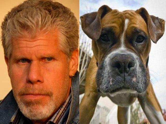 celebrities that look like animals Ron-Perlman