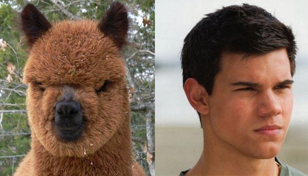 celebrities that look like animals Tayler-Lautner
