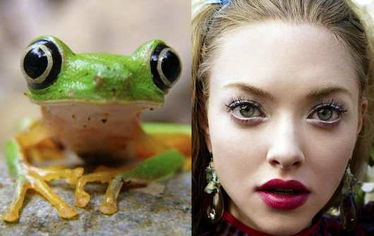 celebrities that look like animals amanda-seyfried