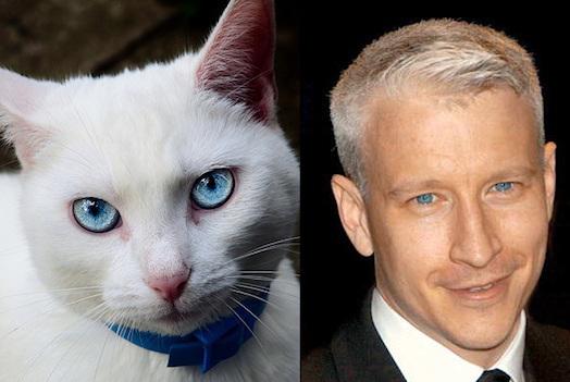 celebrities that look like animals anderson-cooper