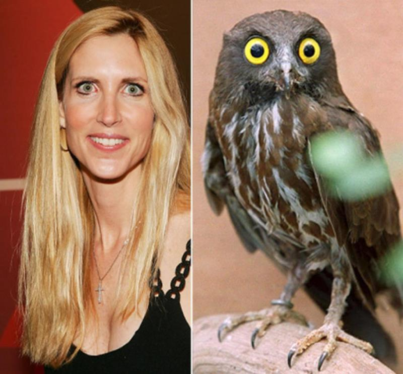 celebrities that look like animals ann-coulter