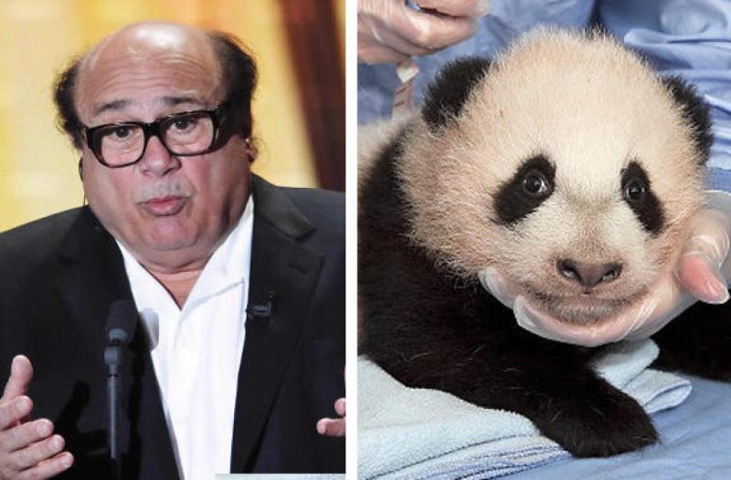 celebrities that look like animals danny devito