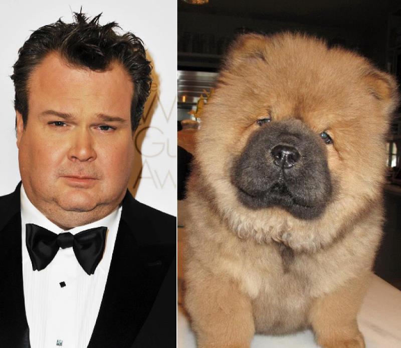 celebrities that look like animals eric-stonestreet