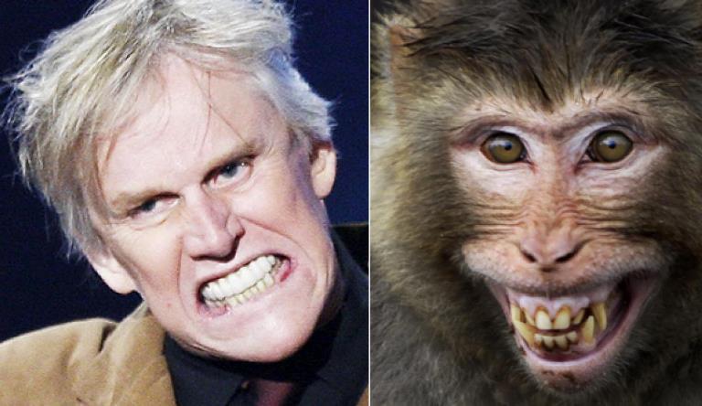 celebrities that look like animals gary-busey