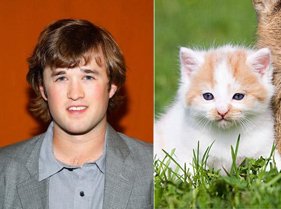 celebrities that look like animals haley-joel-osment