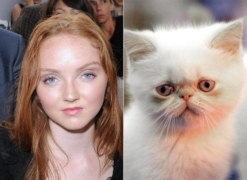 celebrities that look like animals lily-cole sad kitten