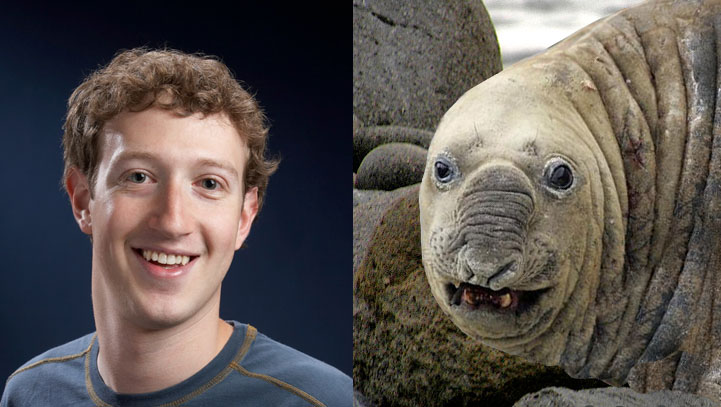 celebrities that look like animals mark-zuckerberg