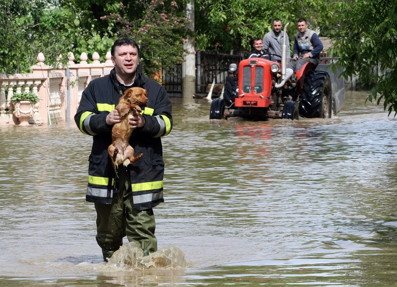 serbia-bosnia-weather-flood-dog