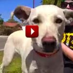 Dog Abandoned by Owner Gets Rescued by Hope For Paws