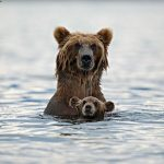 Amazing Photographs of Animals With Their Babies