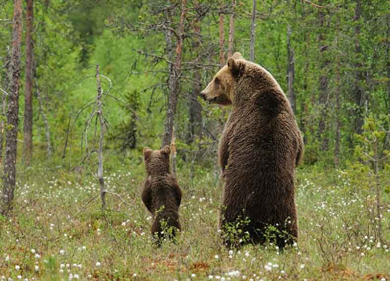 bear with baby2
