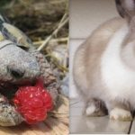 Animal Cuteness Battle – Bunny vs Turtle
