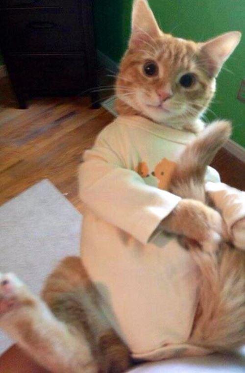 cat onesie1