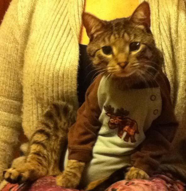 cat onesie2