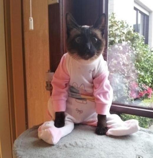 cay in onesie