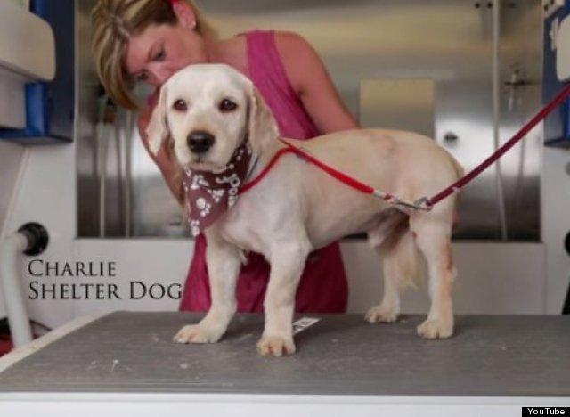 charlie homeless dog4