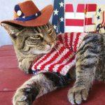 25 Cutest Patriotic Pets